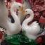 นกเป็ดน้ำคู่รักนำโชคบนฐานไม้มงคล thumbnail 1