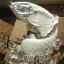 ปลาหลี่ฮื้อเกล็ดเหรียญเงินเล่นน้ำโชคลาภ เหลือกินเหลือใช้อุดมสมบูรณ์ ร่ำรวยเงินทอง thumbnail 2