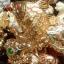 ปลาหลี่ฮื้อเกล็ดเหรียญทองพ่นน้ำโชคลาภ เหลือกินเหลือใช้ thumbnail 1