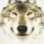 กรอบลอยผ้าแคนวาส ภาพหมาป่า wolf อาร์ต thumbnail 4