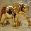 ช้างมงคลทอง thumbnail 1